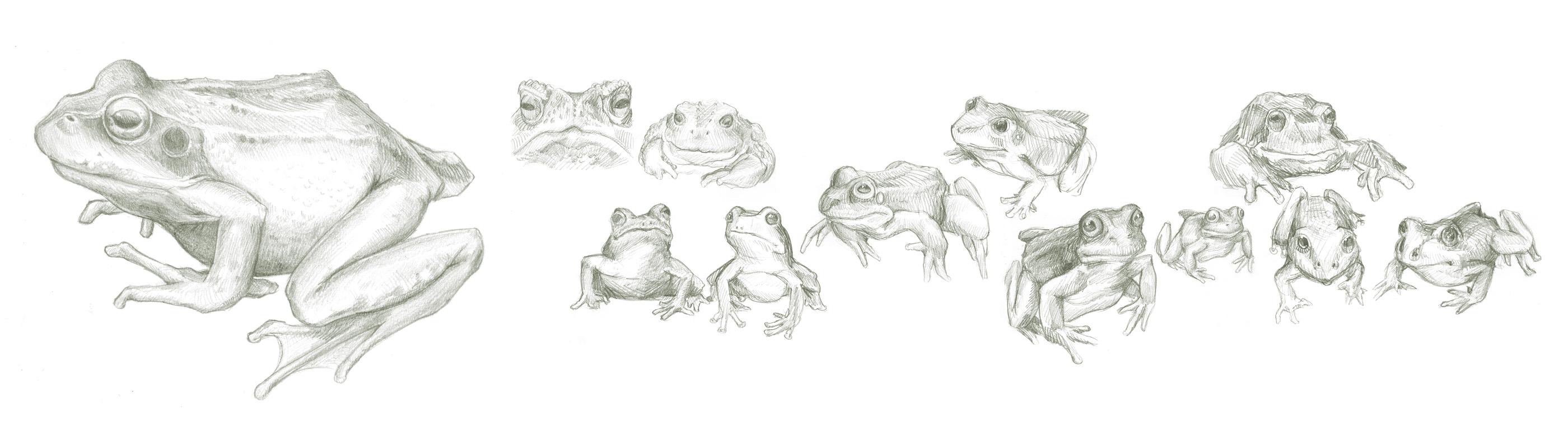 40_frogs