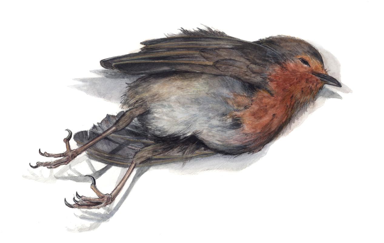 46_birdie