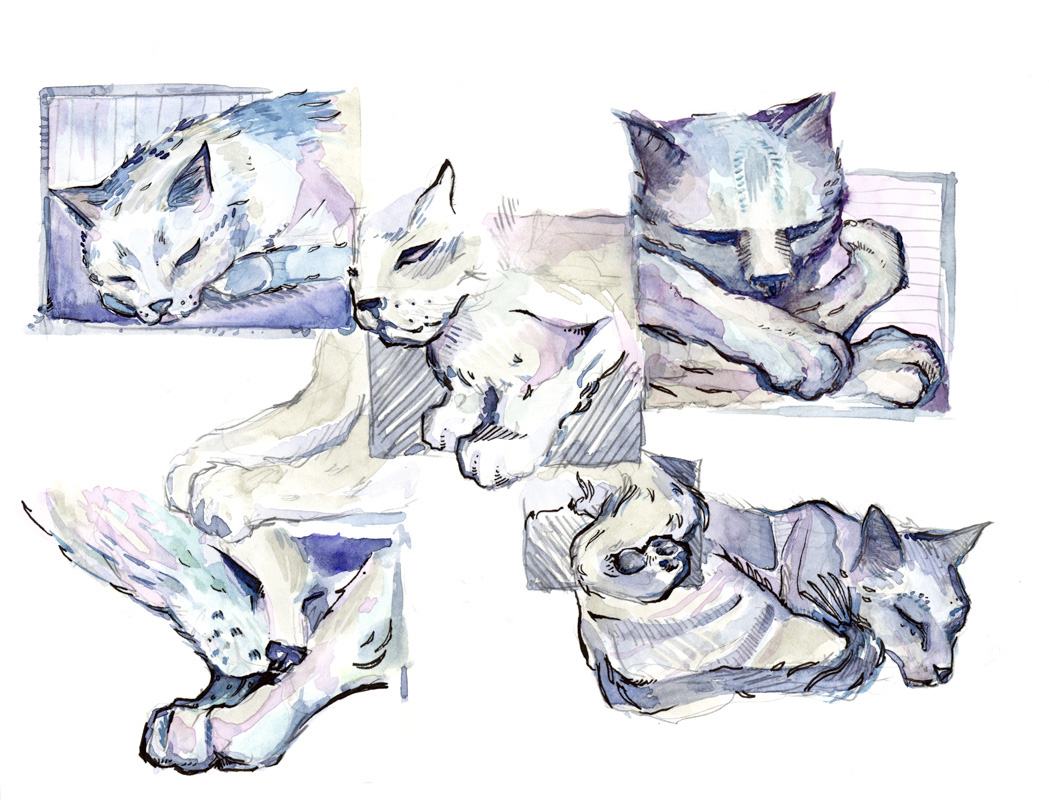 54_2929cats2